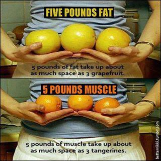 fat vs muscle
